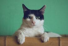 Kiedy wybrać karmy lecznicze dla kotów